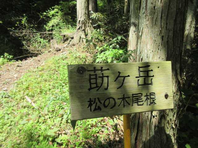 IMG0161JPG新道は松の木尾根道