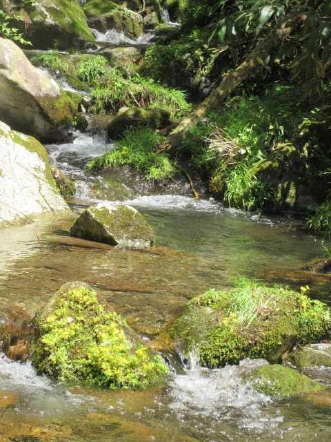 IMG0166JPGヒメレンゲの咲く渓流