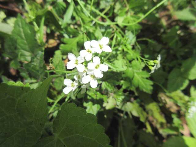 IMG0181JPG白い花