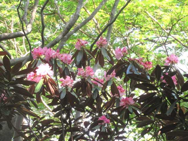 IMG0031JPG集まる花
