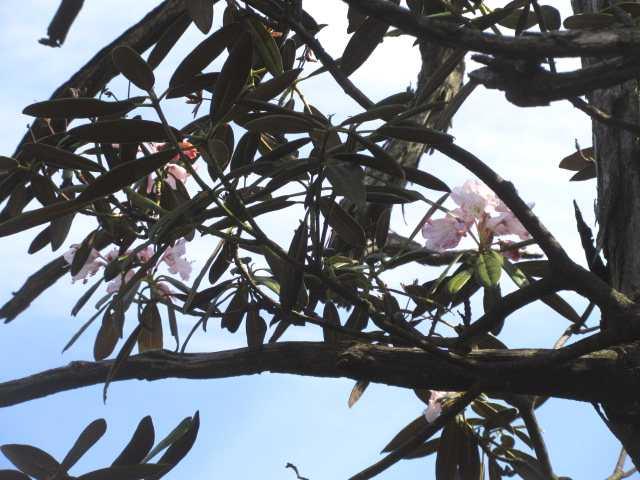 IMG0044JPG枯れ木に花咲く