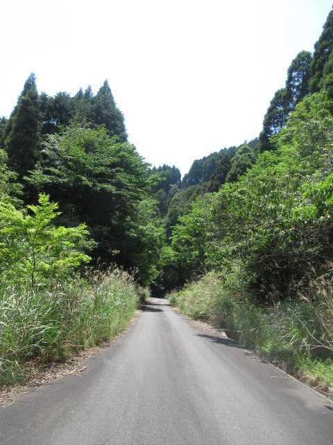 IMG0077JPG日差しの強い林道歩き
