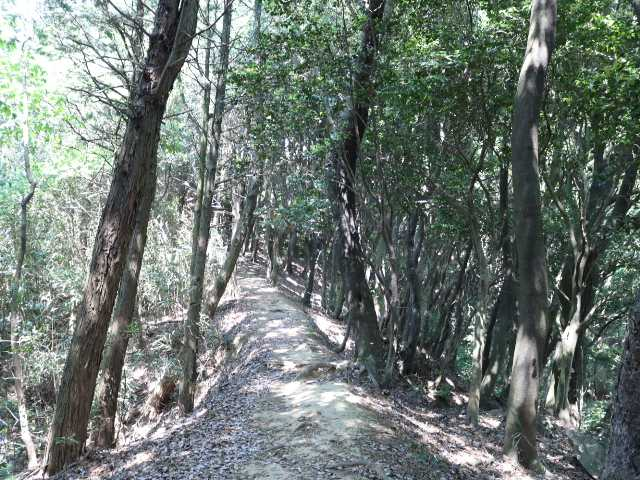 IMG1715JPG明るい登山道