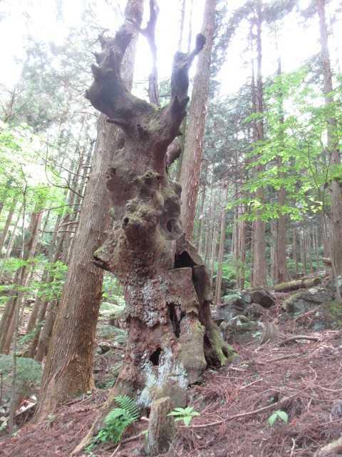 IMG0009JPG枯大木