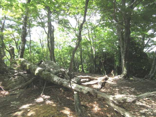 IMG0027JPG平頂の緩木山山頂