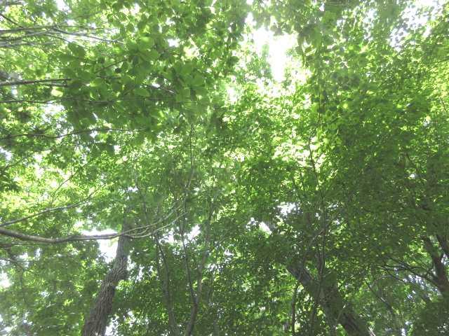IMG0028JP天井のグリーン