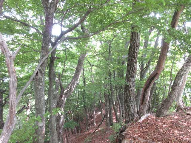 IMG0029JPG緑と樹