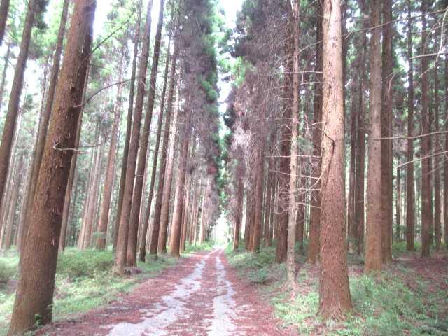 IMG0101JPGr林道下り