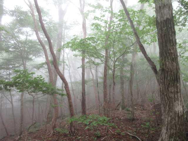 IMG0002JPG霧の林