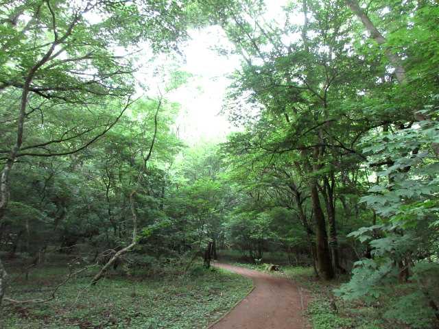 IMG0001JPG男池の林