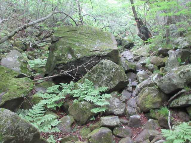 IMG0168JPG岩の径