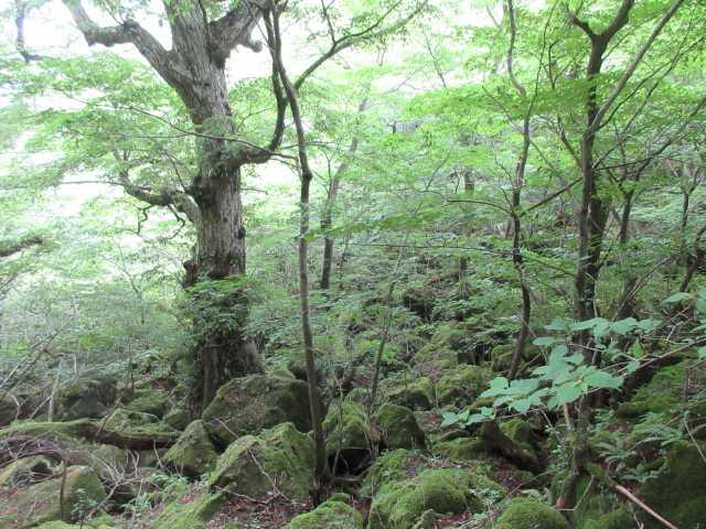 IMG0177JPG苔の林