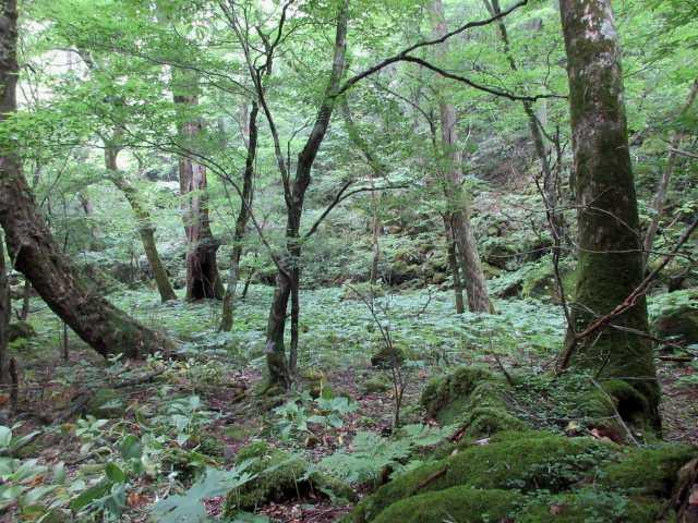 IMG0181JPG林