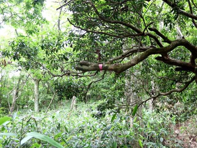 IMG1998JPG笹薮だった高木の目印