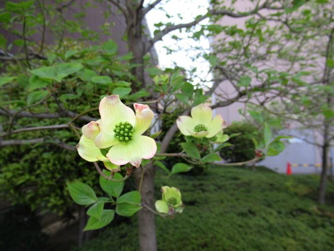 190419花 (3)