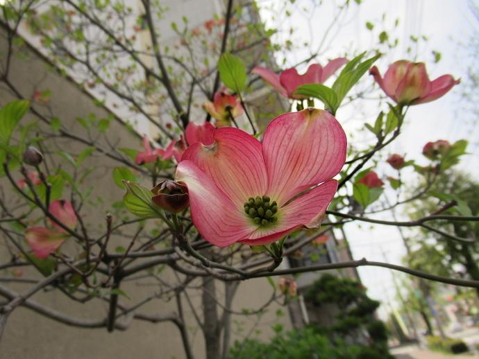 190419花 (4)