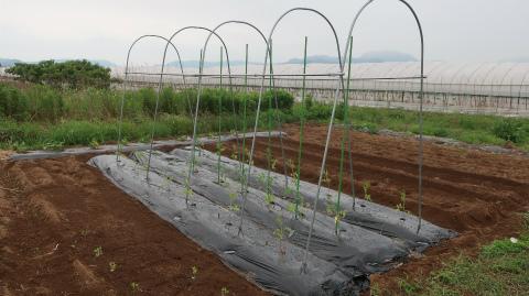 2019602菜園27