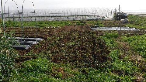 2019.6.09菜園2