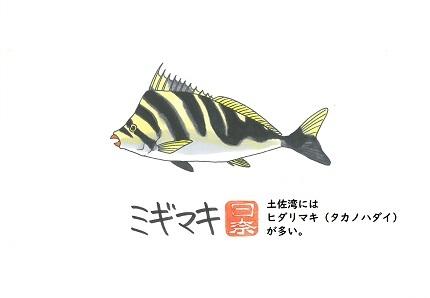 ミギマキ2