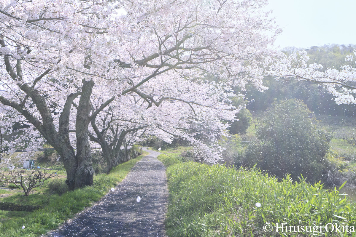 190415桜