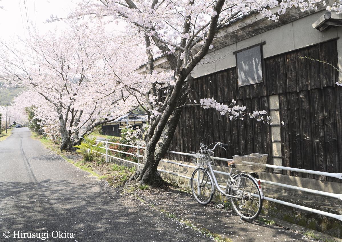 190415桜_2