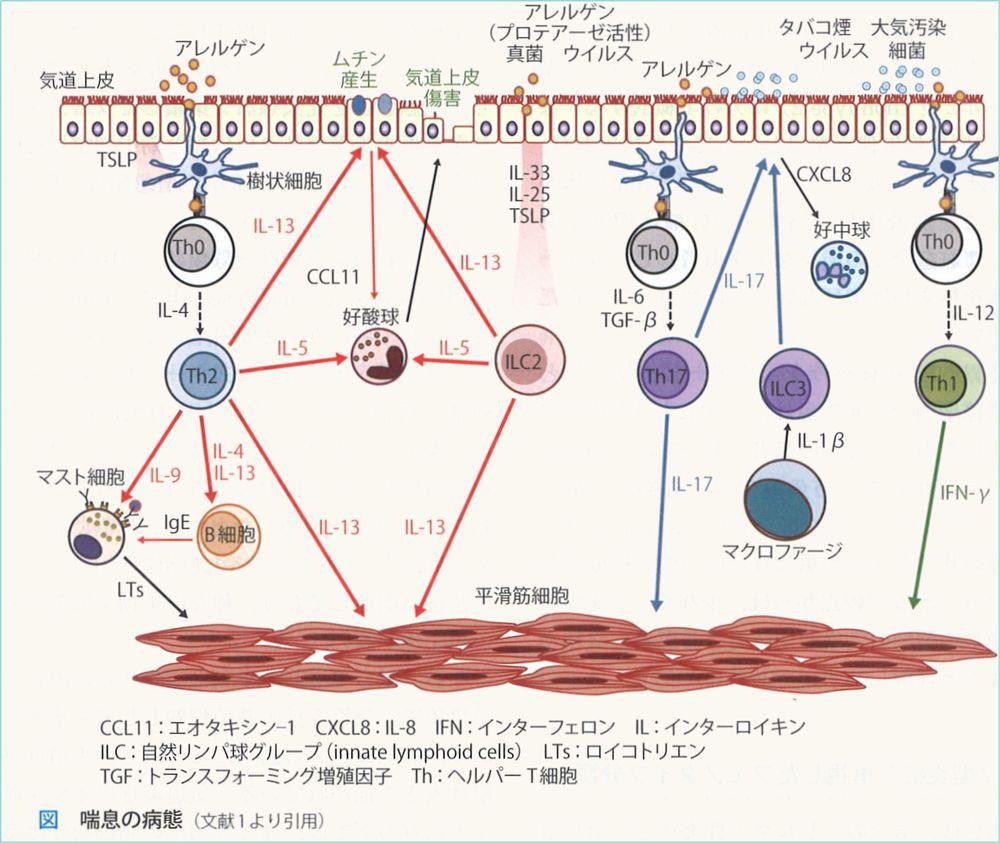 asthmamec (1)