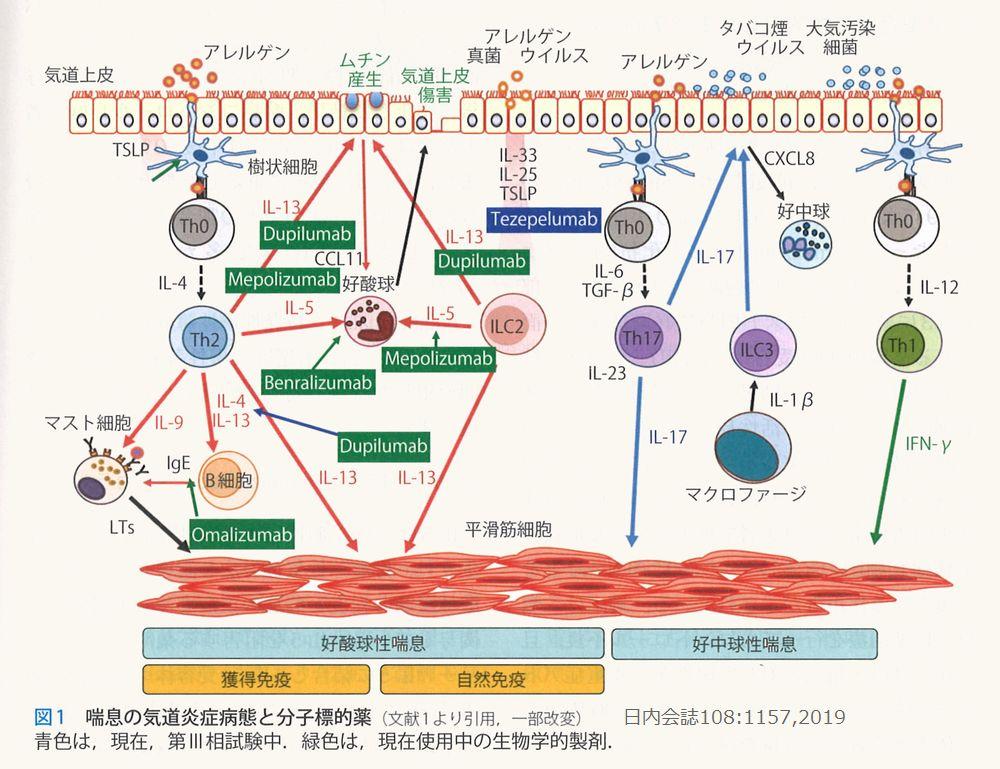 asthmamec (2)
