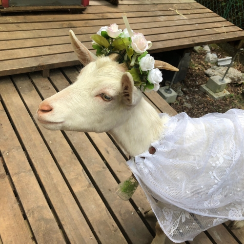 結婚式_190504_0182