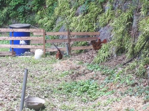 鶏小屋 2nd_190521_0001