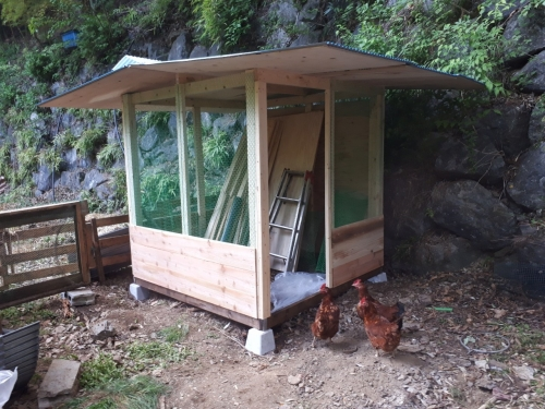 鶏小屋 2nd_190521_0011