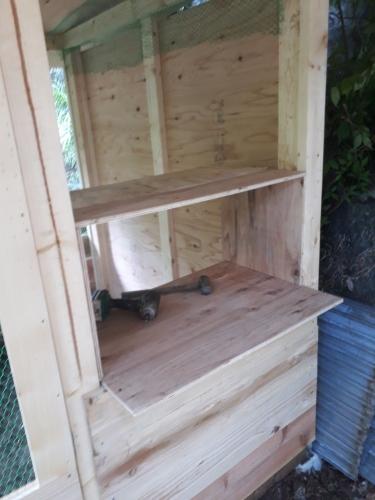 鶏小屋 2nd_190526_0016