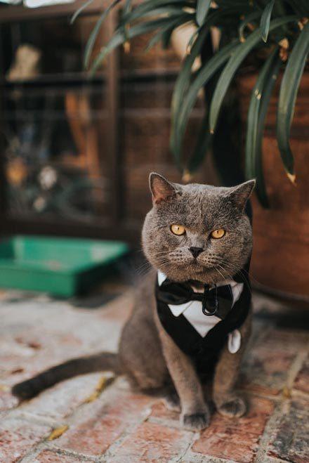 Photos-Cat-Who-Best-Man-Wedding
