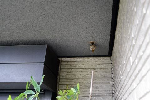 ashinaga1_060319