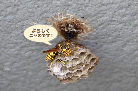 ashinaga5_060319