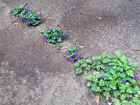garden2_041519