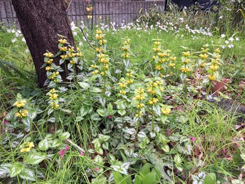 garden3_041519