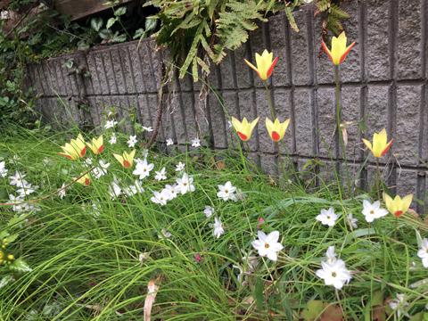 garden4_041519