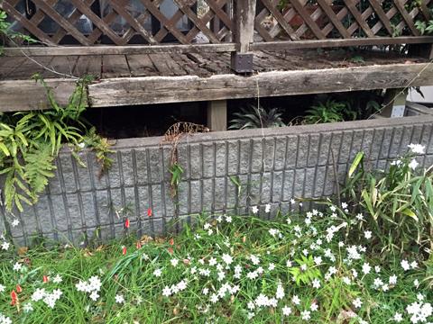 garden5_041519