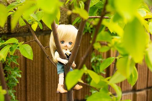 オビツ11ボディ、PARABOXヒカリちゃんヘッドをカスタムして作った猫っ子ポー。大きなお庭で遊んでいます。