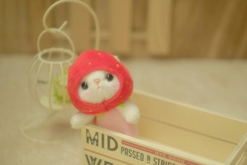 cho cho本舗のいちご猫ちゃんをお迎えしました。
