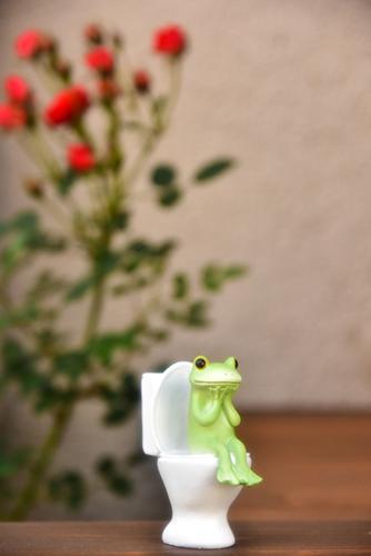 ツバキアキラが撮ったカエルのコポー。薔薇の香りに誘われて、ウンが向いてきたコポタロウ。