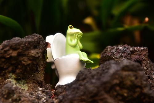 ツバキアキラが撮ったカエルのコポー。ゴツゴツの岩場で、恐る恐る用を足しているコポタロウ。