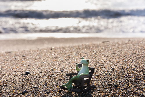 ツバキアキラが撮ったカエルのコポー。波の音に耳をすませながらコーヒーを飲んでいるコポタロウ。