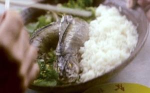ヤバイ魚が乗った丼