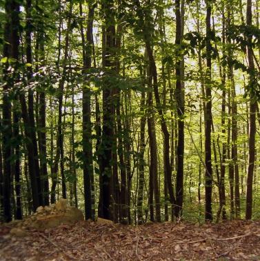 森 森林 ナチュラル