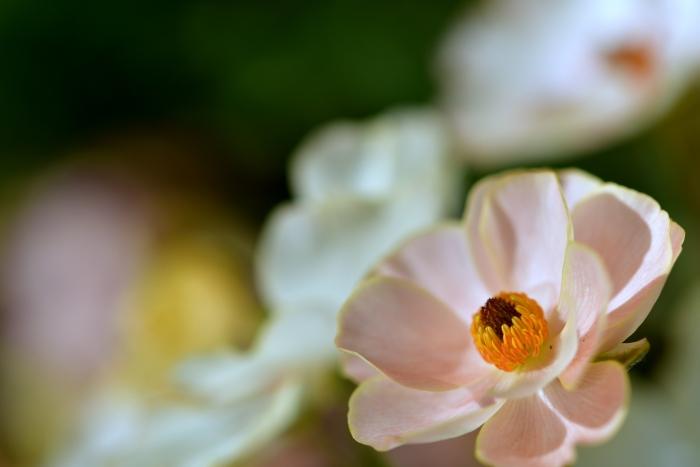 DSC_9358-002花