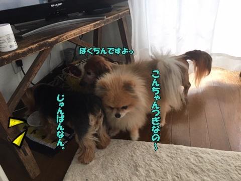 image419041102.jpeg