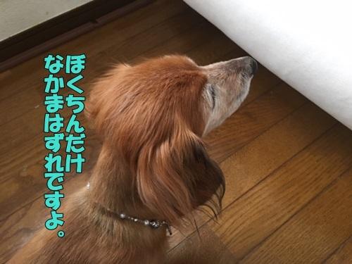 image419043001.jpeg