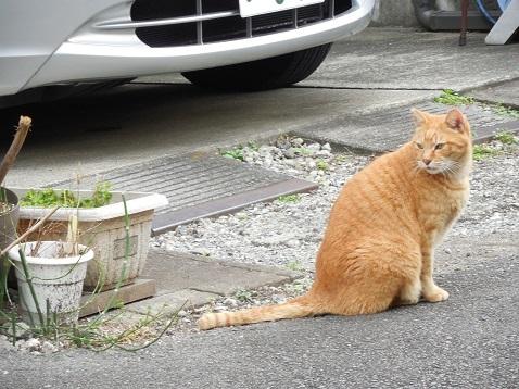通りすがりに見かけた猫(783)