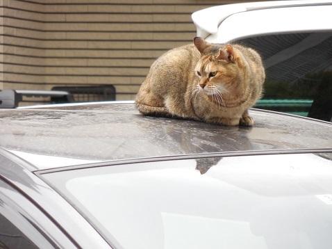 通りすがりに見かけた猫(784)